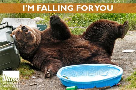 DDow-Bear-Falling-Valentines-Ecard